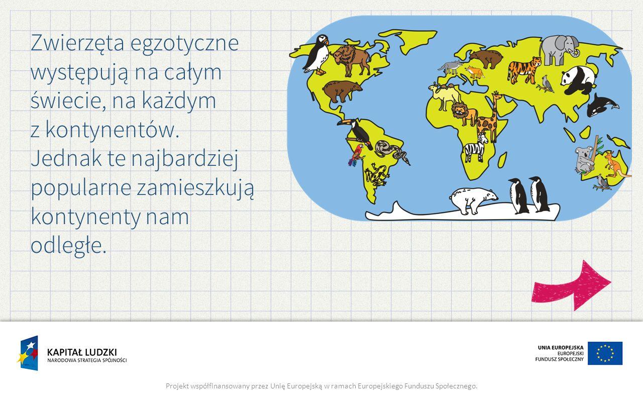 Zwierzęta egzotyczne występują na całym świecie, na każdym z kontynentów. Jednak te najbardziej popularne zamieszkują kontynenty nam odległe. Projekt