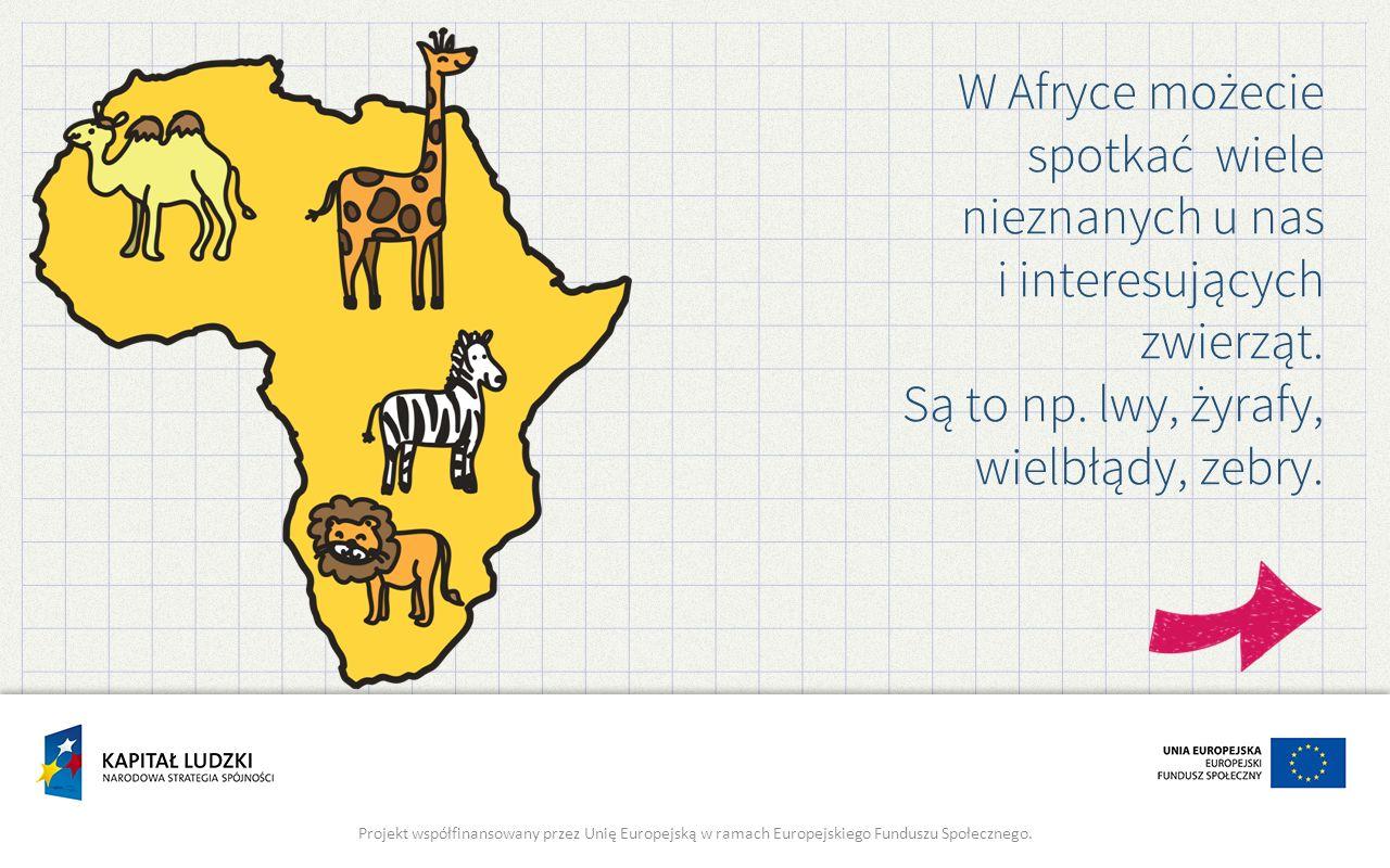W Afryce możecie spotkać wiele nieznanych u nas i interesujących zwierząt. Są to np. lwy, żyrafy, wielbłądy, zebry. Projekt współfinansowany przez Uni