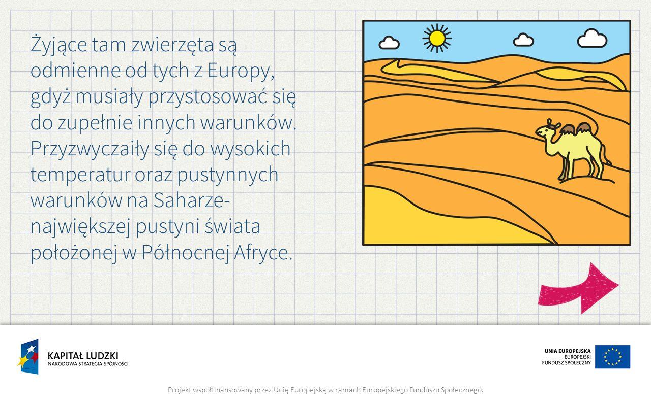 Żyjące tam zwierzęta są odmienne od tych z Europy, gdyż musiały przystosować się do zupełnie innych warunków. Przyzwyczaiły się do wysokich temperatur
