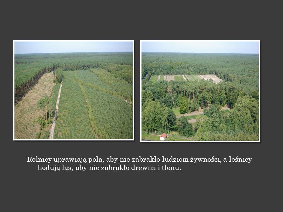 Od niepamiętnych czasów ludzie korzystali z darów lasu, aby przeżyć.