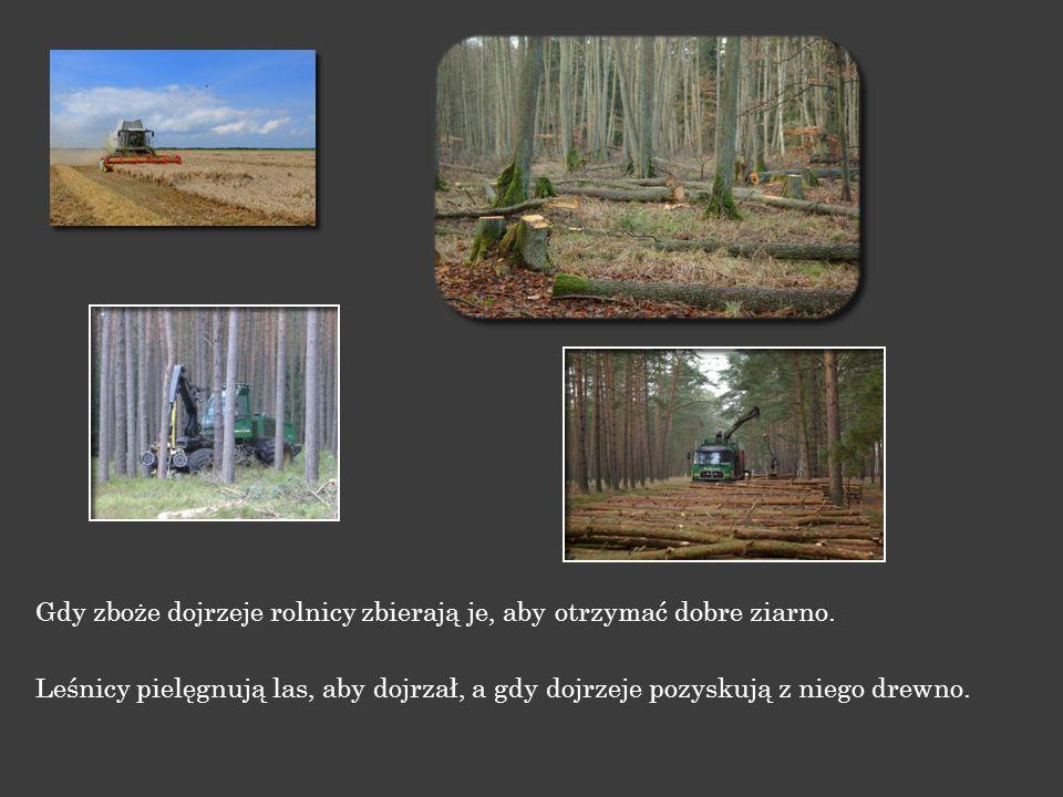 Rolnicy uprawiają pola, aby nie zabrakło ludziom żywności, a leśnicy hodują las, aby nie zabrakło drewna i tlenu.