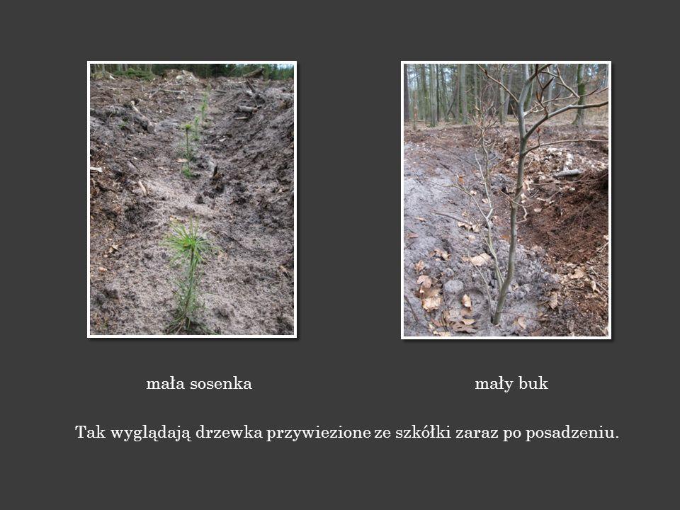 Leśnicy i rolnicy, gdy pozyskają swoje plony, przygotowują glebę dla nowych roślin.