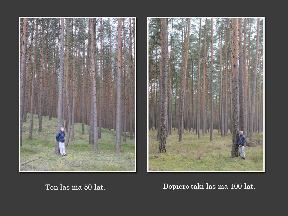 Ja mam 10 lat, a las wokół mnie ma 4 lata… …a las za mą ma 20 lat.