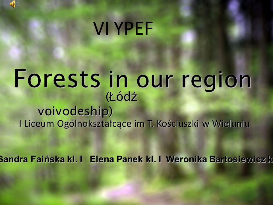 Forests in our region ( Ł ód ź voivodeship) ( Ł ód ź voivodeship) Sandra Faińska kl. I Elena Panek kl. I Weronika Bartosiewicz kl. I VI YPEF I Liceum