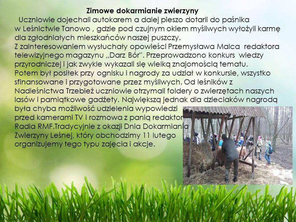 Zimowe dokarmianie zwierzyny Uczniowie dojechali autokarem a dalej pieszo dotarli do paśnika w Leśnictwie Tanowo, gdzie pod czujnym okiem myśliwych wyłożyli karmę dla zgłodniałych mieszkańców naszej puszczy.