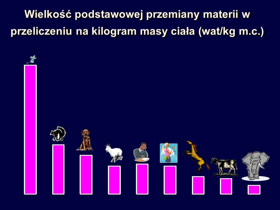 Wielkość podstawowej przemiany materii w przeliczeniu na kilogram masy ciała (wat/kg m.c.)