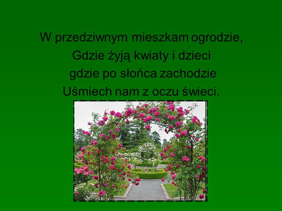 W przedziwnym mieszkam ogrodzie, Gdzie żyją kwiaty i dzieci gdzie po słońca zachodzie Uśmiech nam z oczu świeci.