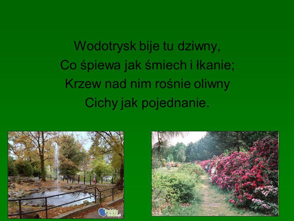Wodotrysk bije tu dziwny, Co śpiewa jak śmiech i łkanie; Krzew nad nim rośnie oliwny Cichy jak pojednanie.