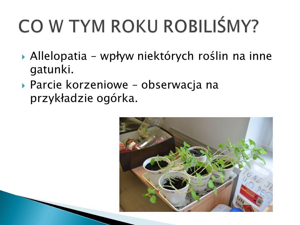  Allelopatia – wpływ niektórych roślin na inne gatunki.  Parcie korzeniowe – obserwacja na przykładzie ogórka.