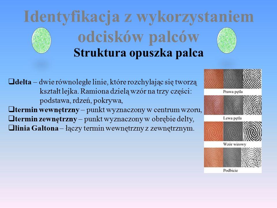Identyfikacja z wykorzystaniem odcisków palców Struktura opuszka palca  delta – dwie równoległe linie, które rozchylając się tworzą kształt lejka.