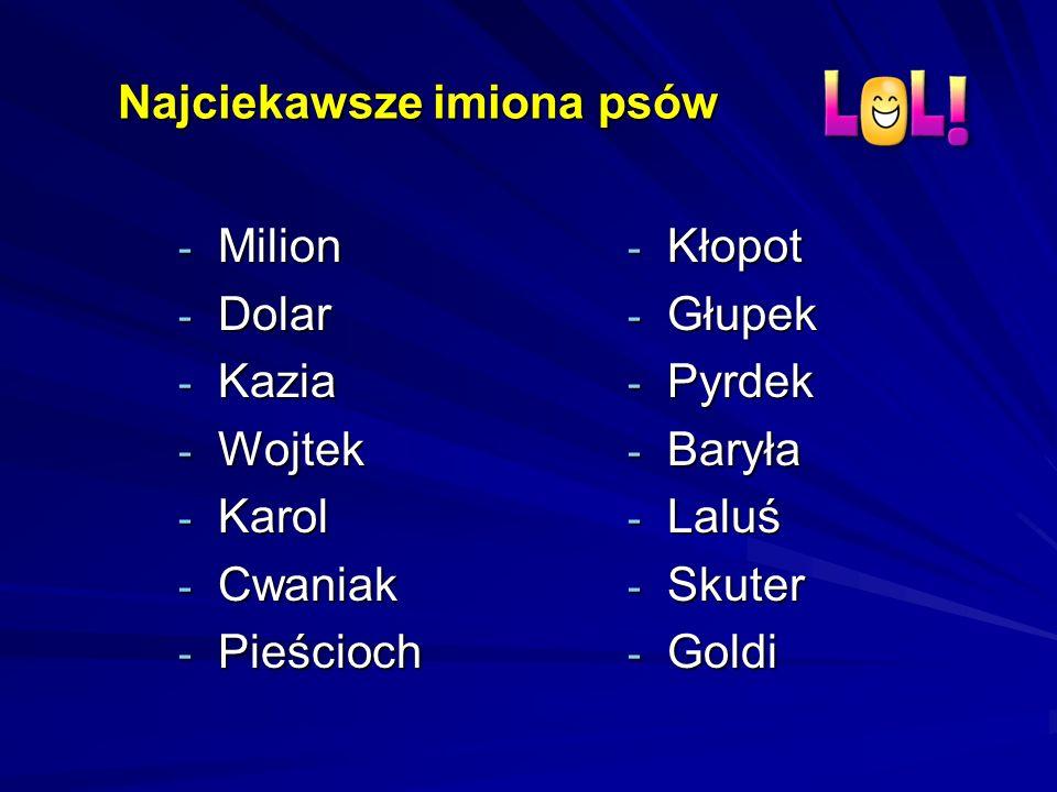 Najciekawsze imiona psów - Milion - Dolar - Kazia - Wojtek - Karol - Cwaniak - Pieścioch - Kłopot - Głupek - Pyrdek - Baryła - Laluś - Skuter - Goldi