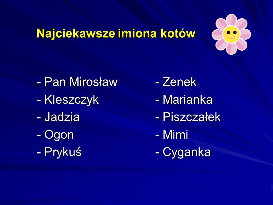 Najciekawsze imiona kotów - Pan Mirosław - Kleszczyk - Jadzia - Ogon - Prykuś - Zenek - Marianka - Piszczałek - Mimi - Cyganka