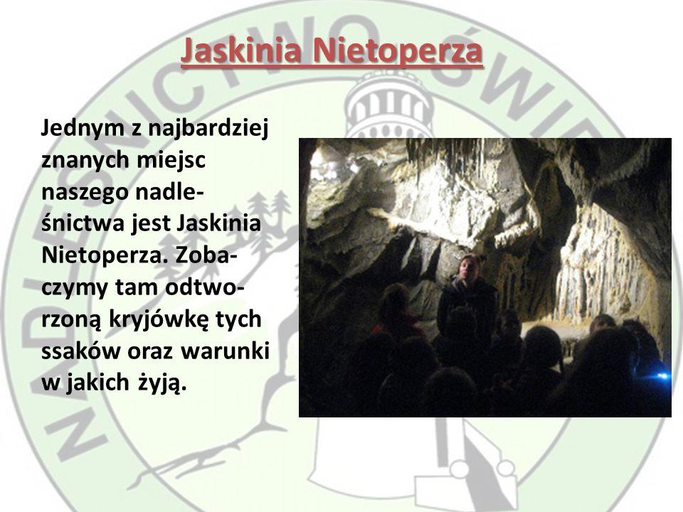 Jaskinia Nietoperza Jednym z najbardziej znanych miejsc naszego nadle- śnictwa jest Jaskinia Nietoperza.