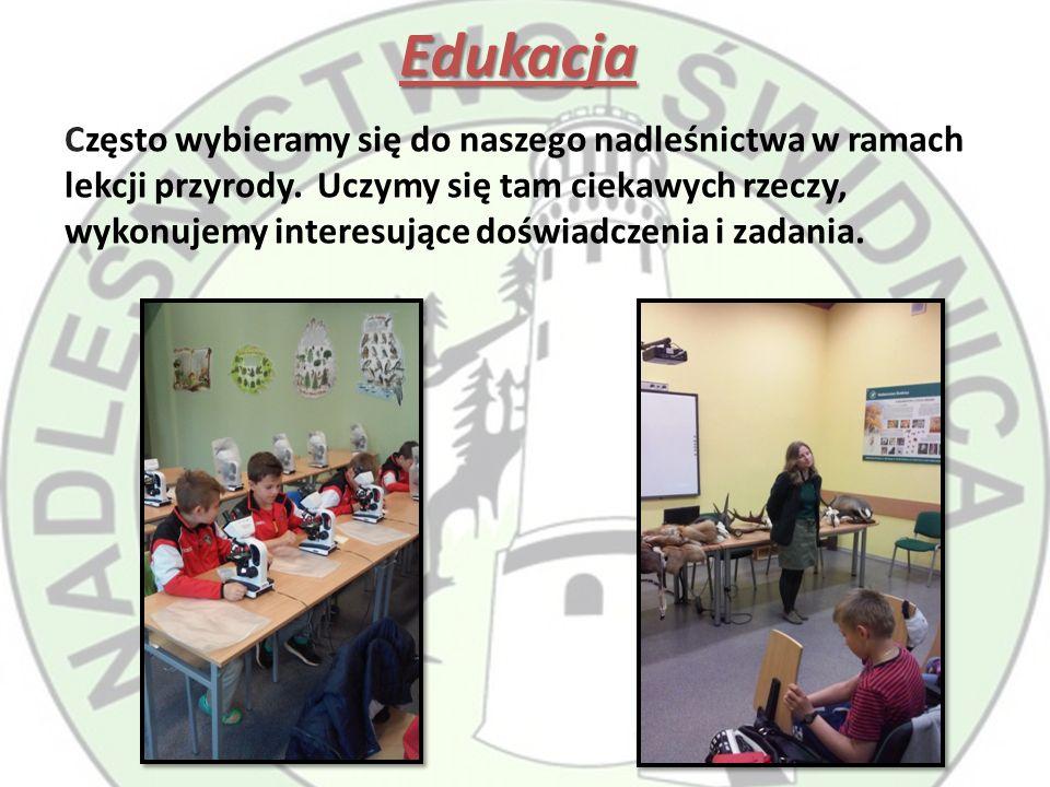 Edukacja Często wybieramy się do naszego nadleśnictwa w ramach lekcji przyrody.