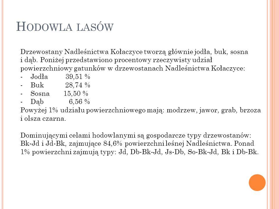 Drzewostany Nadleśnictwa Kołaczyce tworzą głównie jodła, buk, sosna i dąb.