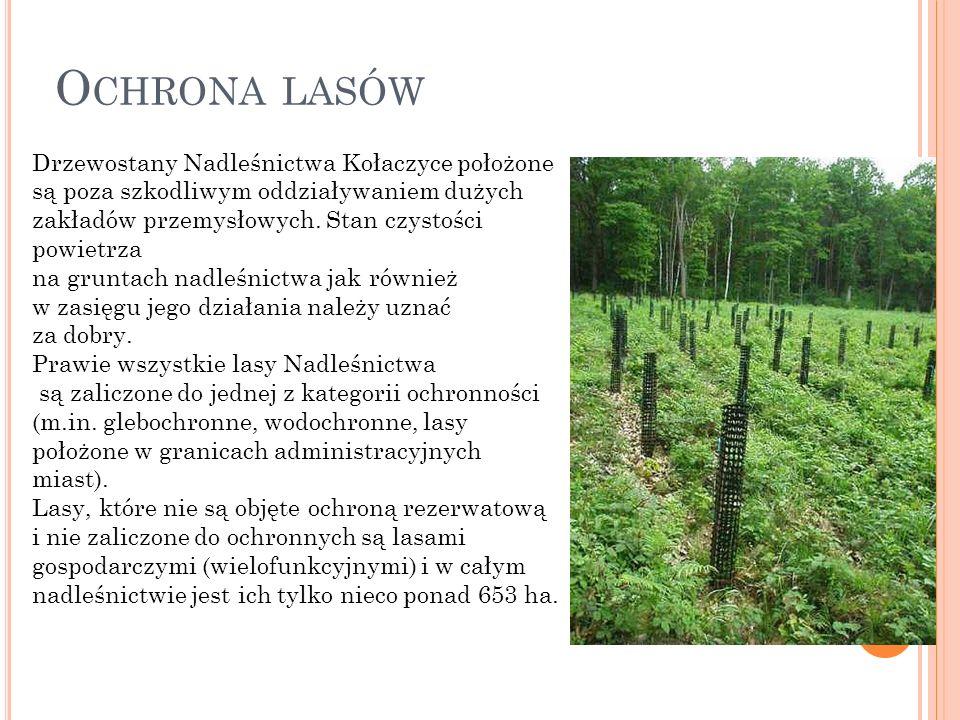 O CHRONA LASÓW Drzewostany Nadleśnictwa Kołaczyce położone są poza szkodliwym oddziaływaniem dużych zakładów przemysłowych.