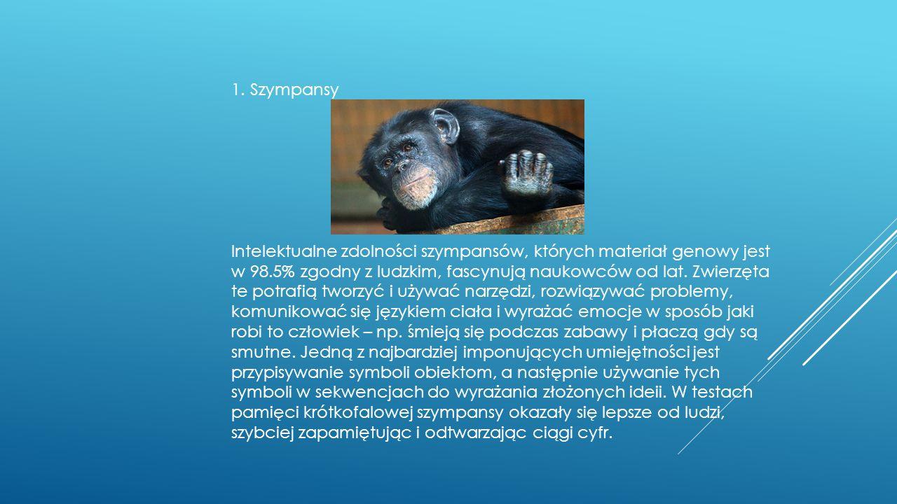 1. Szympansy Intelektualne zdolności szympansów, których materiał genowy jest w 98.5% zgodny z ludzkim, fascynują naukowców od lat. Zwierzęta te potra