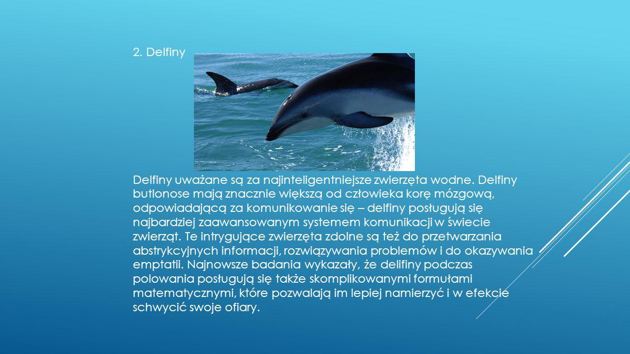 2. Delfiny Delfiny uważane są za najinteligentniejsze zwierzęta wodne.