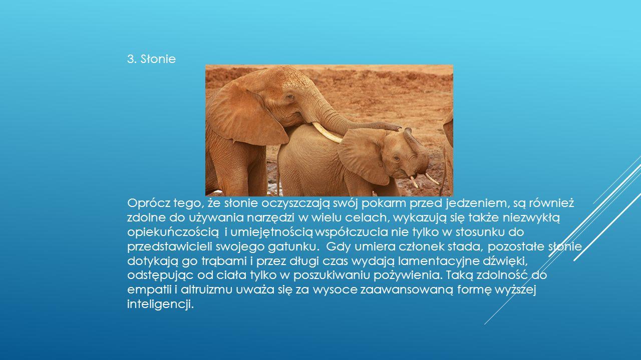 3. Słonie Oprócz tego, że słonie oczyszczają swój pokarm przed jedzeniem, są również zdolne do używania narzędzi w wielu celach, wykazują się także ni