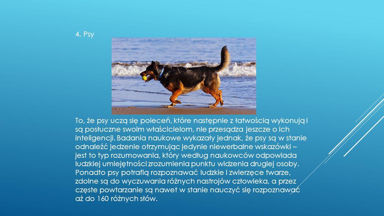 4. Psy To, że psy uczą się poleceń, które następnie z łatwością wykonują i są posłuczne swoim właścicielom, nie przesądza jeszcze o ich inteligencji.