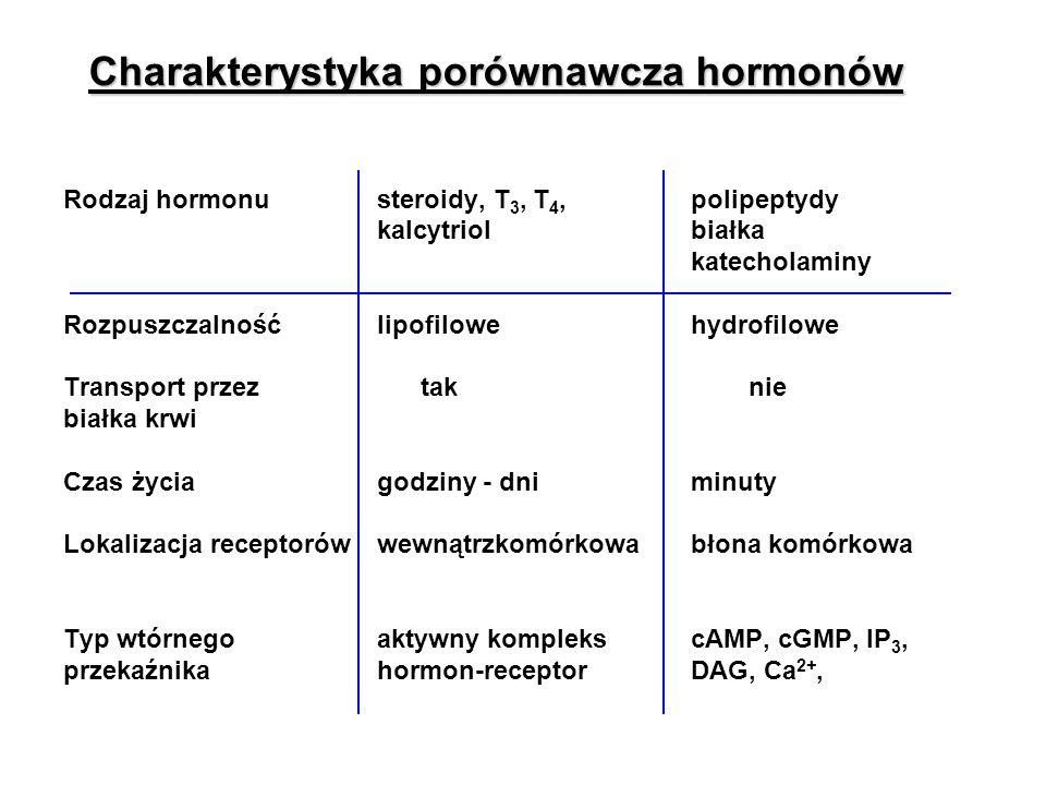 Charakterystyka porównawcza hormonów Rodzaj hormonusteroidy, T 3, T 4,polipeptydy kalcytriolbiałka katecholaminy Rozpuszczalnośćlipofilowehydrofilowe