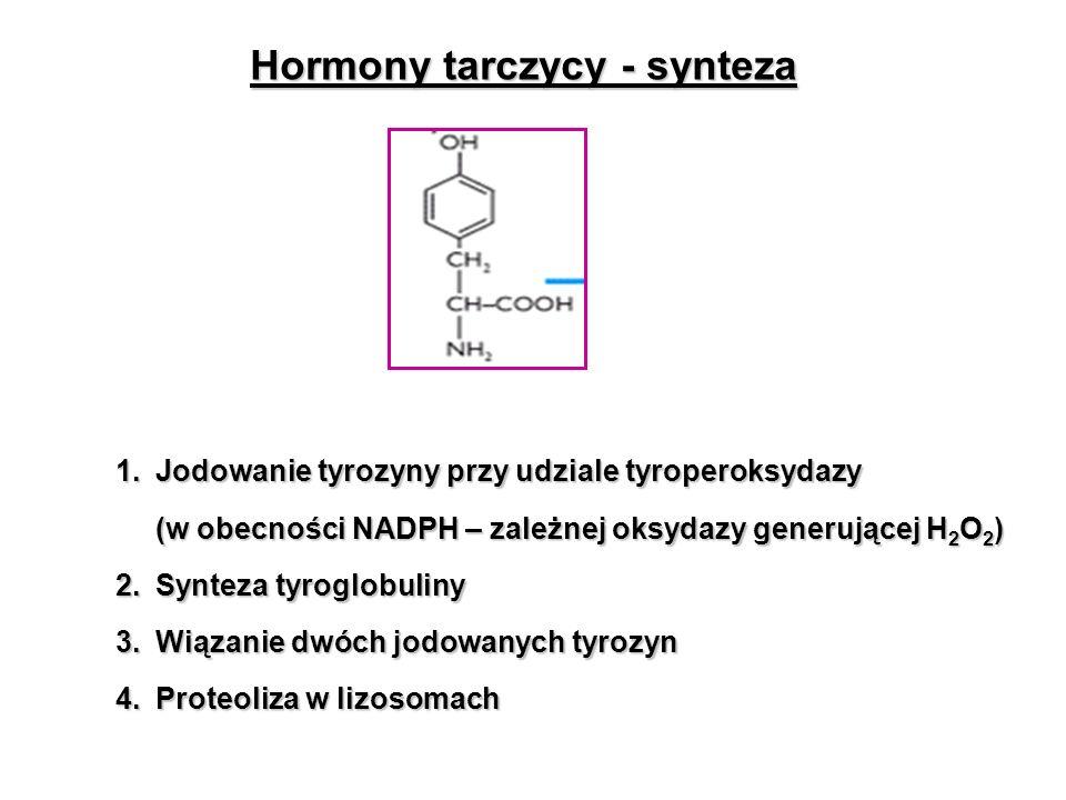Hormony tarczycy - synteza 1.Jodowanie tyrozyny przy udziale tyroperoksydazy (w obecności NADPH – zależnej oksydazy generującej H 2 O 2 ) 2. Synteza t