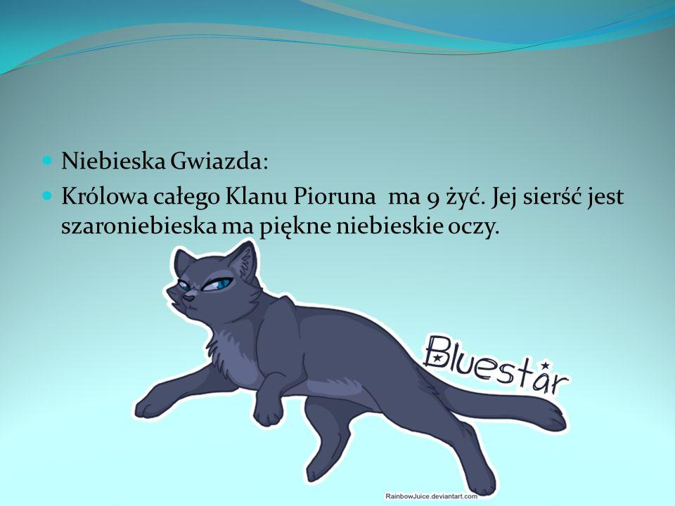 Niebieska Gwiazda: Królowa całego Klanu Pioruna ma 9 żyć. Jej sierść jest szaroniebieska ma piękne niebieskie oczy.