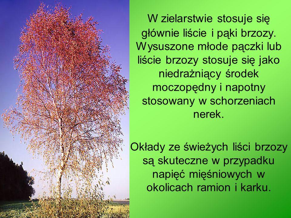 Martyna Mielniczuk Zespół Szkół nr 3 Klasa III TH Źródło: http://www.uzytkowanielasu.zafriko.pl/kat/wlasciwosci_lecznicz http://kasikap.republika.pl/warzywa.html http://www.vismaya- maitreya.pl/naturalne_leczenie_wlasciwosci_lecznicze_wybranych_drzew_cz1.html