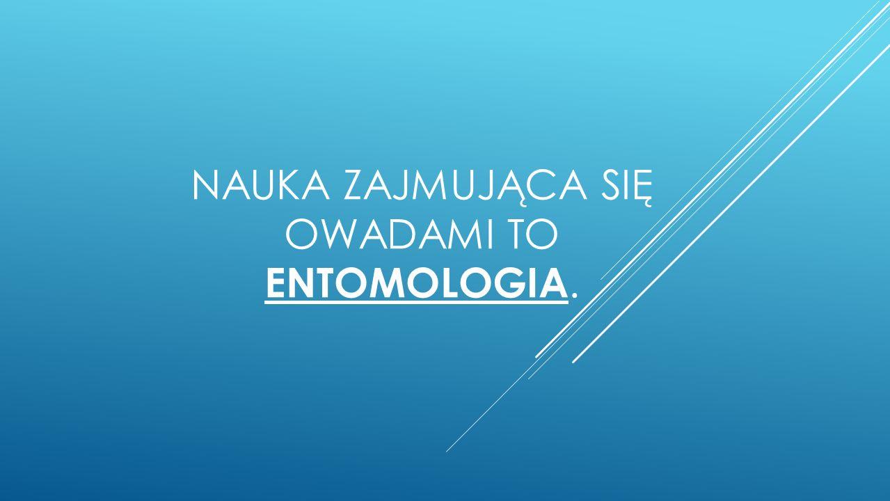 NAUKA ZAJMUJĄCA SIĘ OWADAMI TO ENTOMOLOGIA.