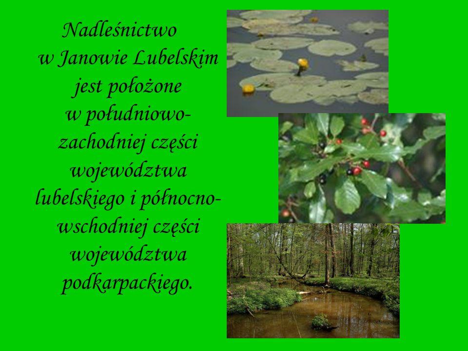 Nadleśnictwo w Janowie Lubelskim jest położone w południowo- zachodniej części województwa lubelskiego i północno- wschodniej części województwa podka