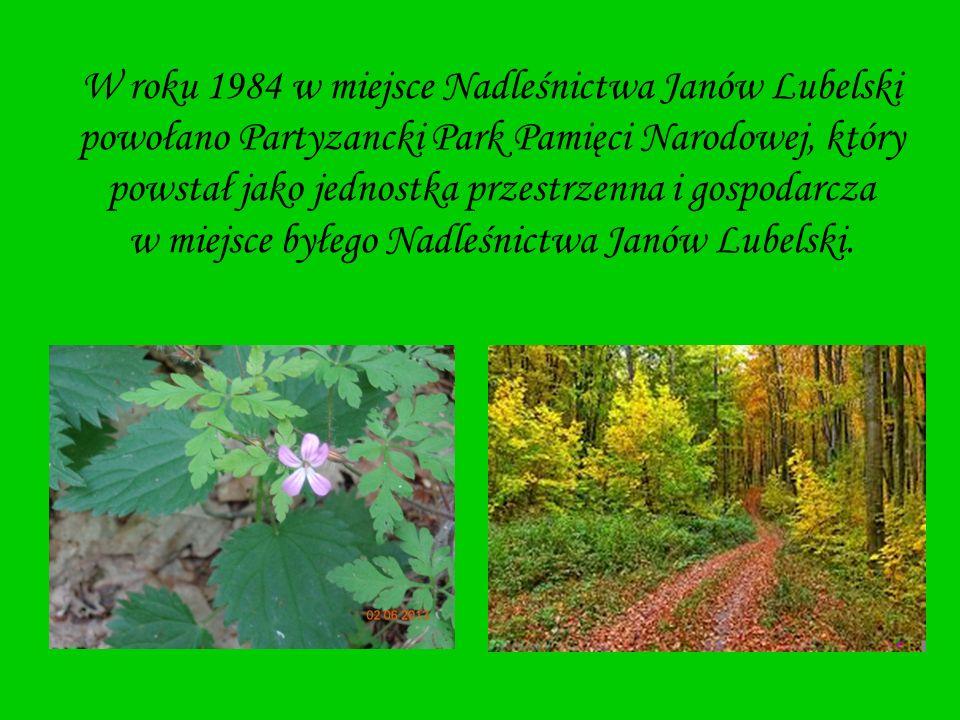 W roku 1984 w miejsce Nadleśnictwa Janów Lubelski powołano Partyzancki Park Pamięci Narodowej, który powstał jako jednostka przestrzenna i gospodarcza