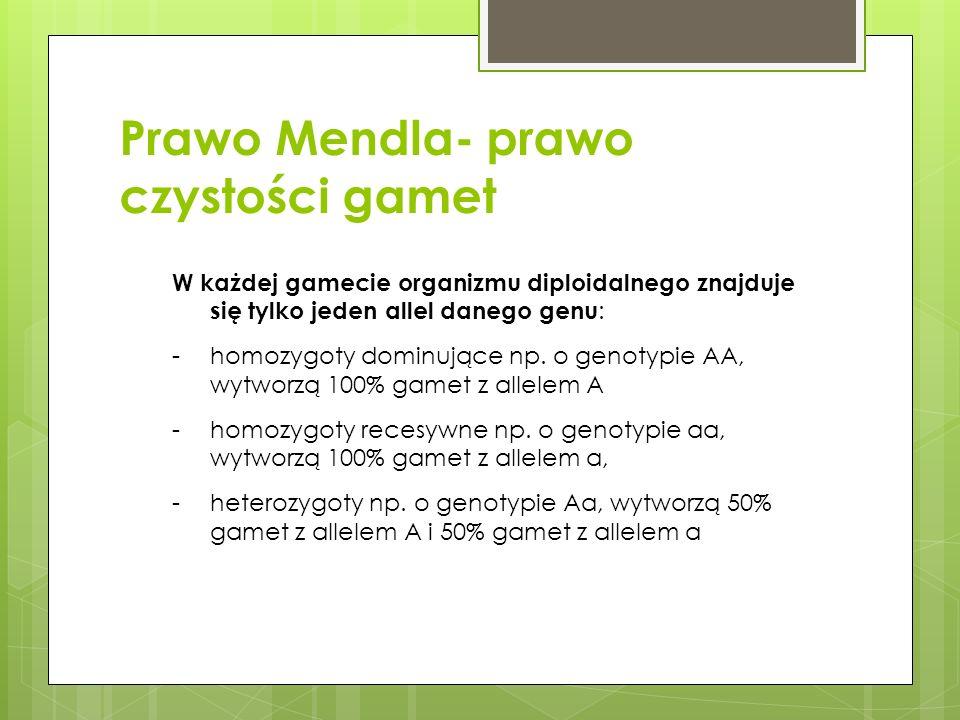 Prawo Mendla- prawo czystości gamet W każdej gamecie organizmu diploidalnego znajduje się tylko jeden allel danego genu : -homozygoty dominujące np. o