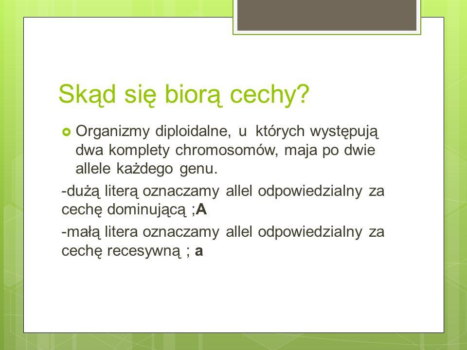 Skąd się biorą cechy?  Organizmy diploidalne, u których występują dwa komplety chromosomów, maja po dwie allele każdego genu. -dużą literą oznaczamy