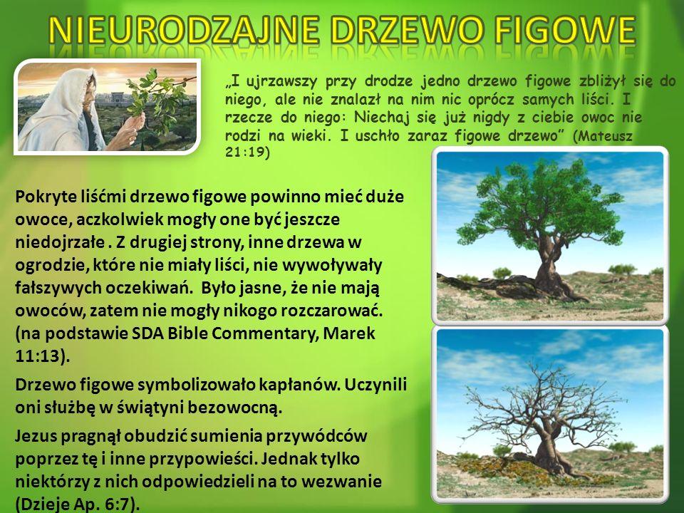 """""""I ujrzawszy przy drodze jedno drzewo figowe zbliżył się do niego, ale nie znalazł na nim nic oprócz samych liści. I rzecze do niego: Niechaj się już"""