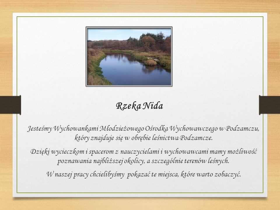 Rzeka Nida Jesteśmy Wychowankami Młodzieżowego Ośrodka Wychowawczego w Podzamczu, który znajduje się w obrębie leśnictwa Podzamcze.