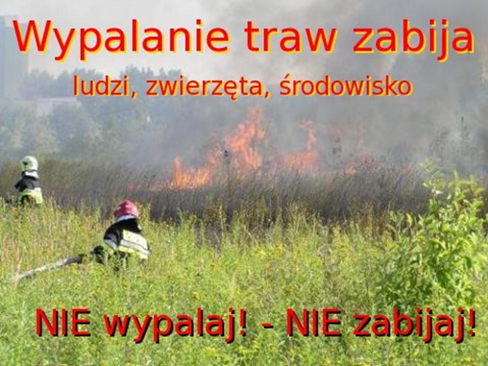 DLACZEGO LUDZIE WYPALAJ Ą TRAWY.Ludzie wypalają trawy aby pozbyć się chwastów i ich nasion.