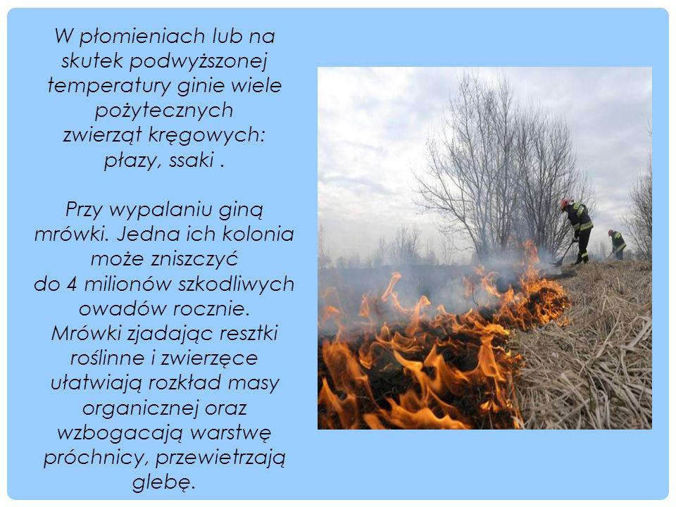 W płomieniach lub na skutek podwyższonej temperatury ginie wiele pożytecznych zwierząt kręgowych: płazy, ssaki. Przy wypalaniu giną mrówki. Jedna ich