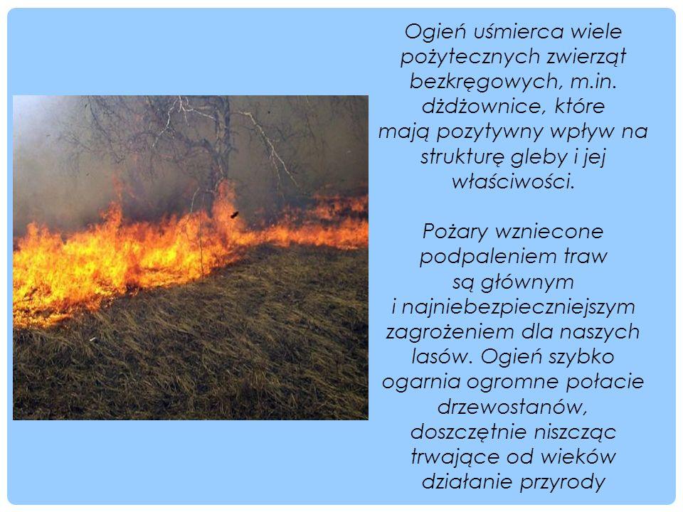 Ogień uśmierca wiele pożytecznych zwierząt bezkręgowych, m.in. dżdżownice, które mają pozytywny wpływ na strukturę gleby i jej właściwości. Pożary wzn