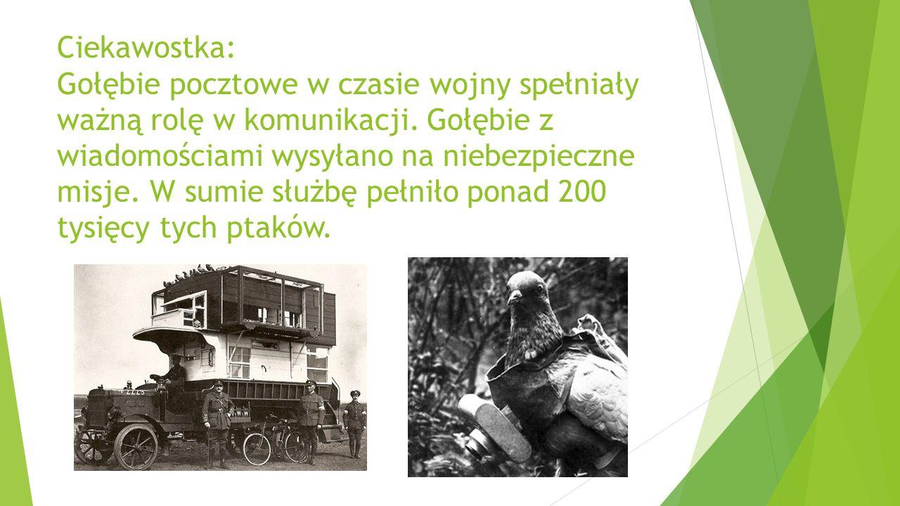 Ciekawostka: Gołębie pocztowe w czasie wojny spełniały ważną rolę w komunikacji.