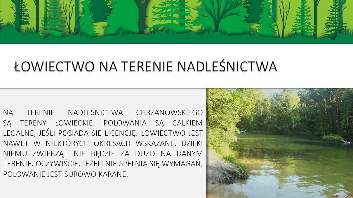 NA TERENIE NADLEŚNICTWA CHRZANOWSKIEGO SĄ TERENY ŁOWIECKIE.