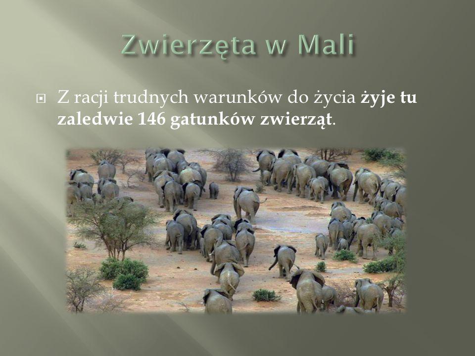  Z racji trudnych warunków do życia żyje tu zaledwie 146 gatunków zwierząt.