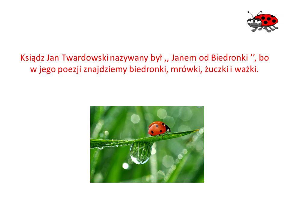 Ksiądz Jan Twardowski nazywany był,, Janem od Biedronki '', bo w jego poezji znajdziemy biedronki, mrówki, żuczki i ważki.