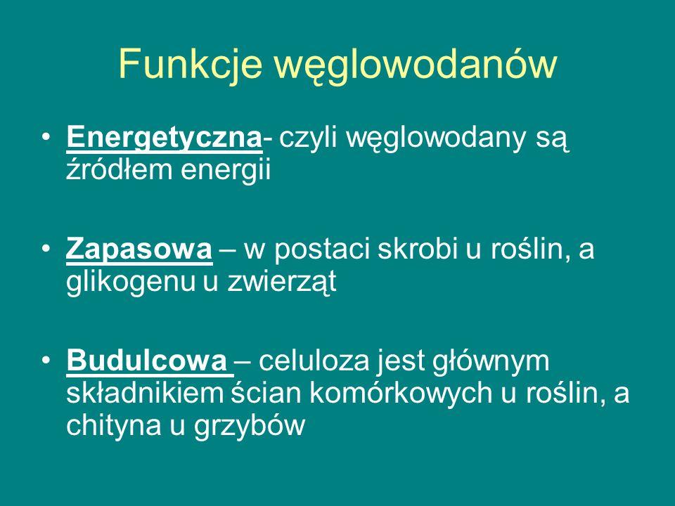 Funkcje węglowodanów Energetyczna- czyli węglowodany są źródłem energii Zapasowa – w postaci skrobi u roślin, a glikogenu u zwierząt Budulcowa – celuloza jest głównym składnikiem ścian komórkowych u roślin, a chityna u grzybów
