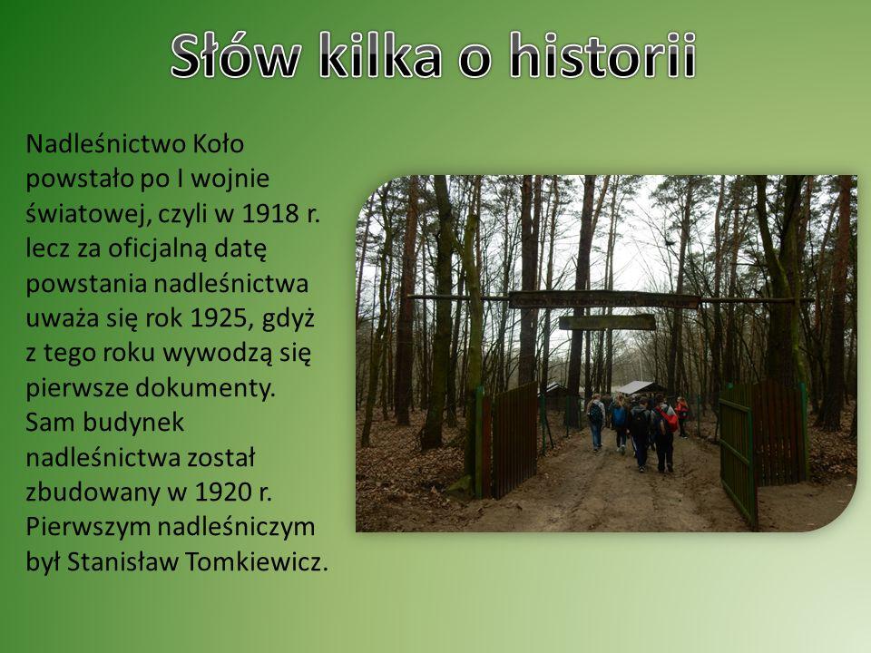 Nadleśnictwo Koło powstało po I wojnie światowej, czyli w 1918 r.