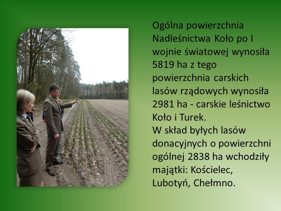 Ogólna powierzchnia Nadleśnictwa Koło po I wojnie światowej wynosiła 5819 ha z tego powierzchnia carskich lasów rządowych wynosiła 2981 ha - carskie leśnictwo Koło i Turek.