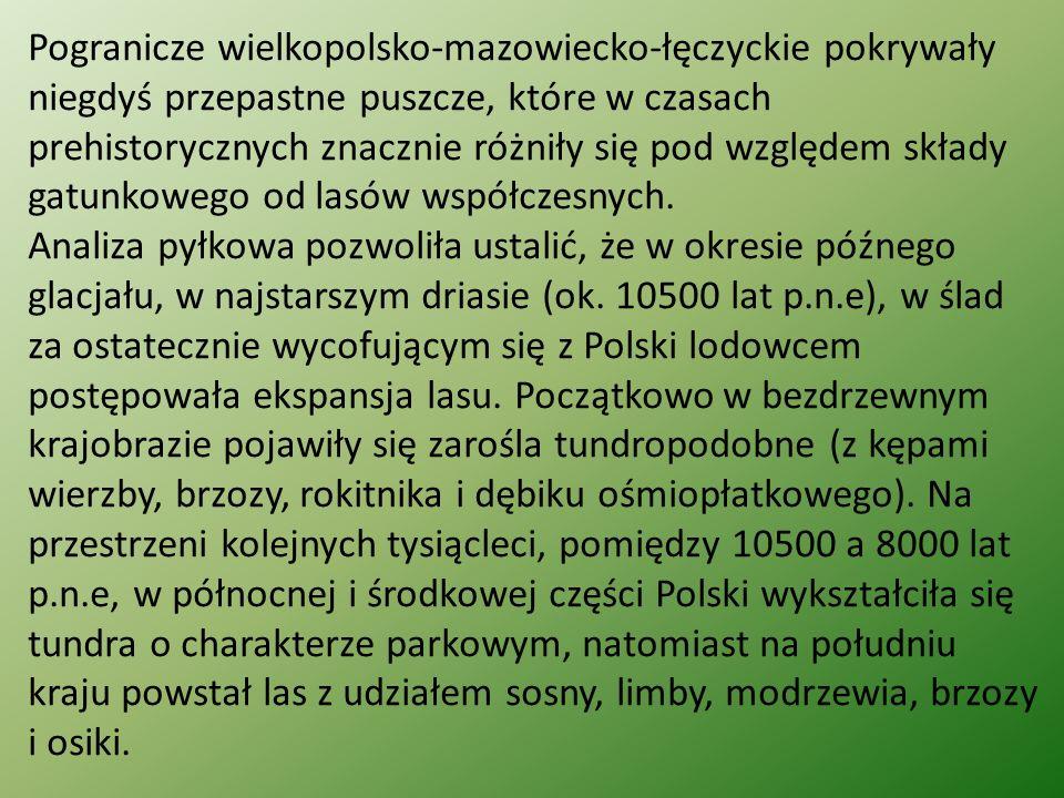 Pogranicze wielkopolsko-mazowiecko-łęczyckie pokrywały niegdyś przepastne puszcze, które w czasach prehistorycznych znacznie różniły się pod względem składy gatunkowego od lasów współczesnych.
