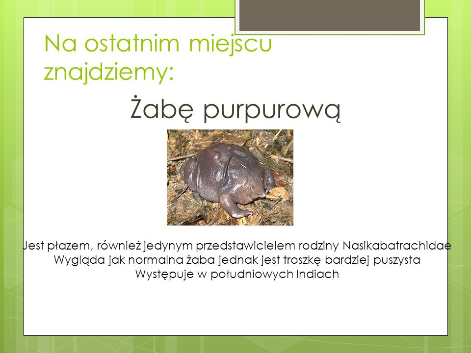 Na ostatnim miejscu znajdziemy: Żabę purpurową Jest płazem, również jedynym przedstawicielem rodziny Nasikabatrachidae Wygląda jak normalna żaba jednak jest troszkę bardziej puszysta Występuje w południowych Indiach