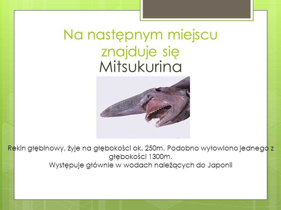 Na następnym miejscu znajduje się Mitsukurina Rekin głębinowy, żyje na głębokości ok.