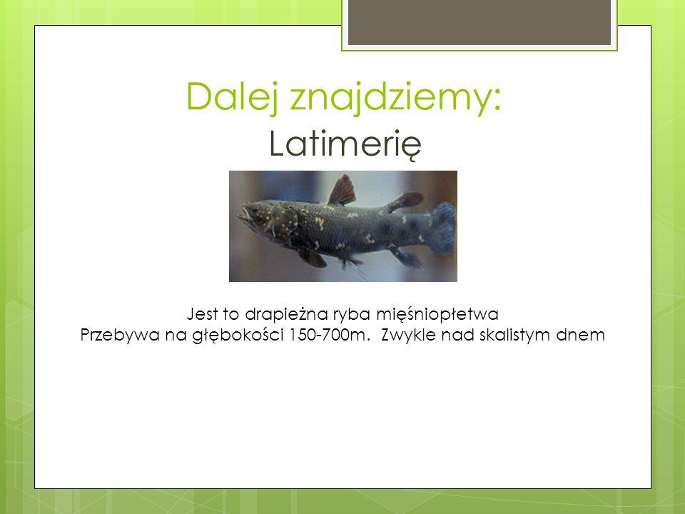 Dalej znajdziemy: Latimerię Jest to drapieżna ryba mięśniopłetwa Przebywa na głębokości 150-700m.