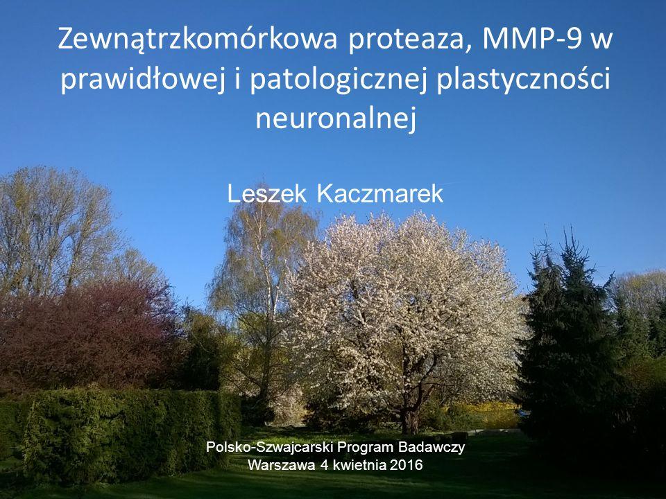 Zewnątrzkomórkowa proteaza, MMP-9 w prawidłowej i patologicznej plastyczności neuronalnej Leszek Kaczmarek Polsko-Szwajcarski Program Badawczy Warszawa 4 kwietnia 2016